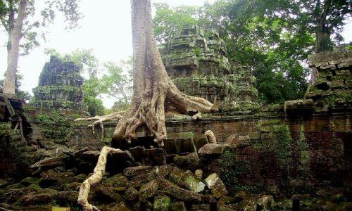 Zdjęcie KAMBODżA / okolice Siem Reap / zespół Angkor Wat / nieustająca walka dżungli z kamiennymi murami świątyń