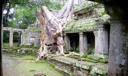 Zdjęcie KAMBODżA / okolice Siem Reap / w Ta Prohm /  w ofierze światyni - czasami mury się opierają, a drzewo usycha