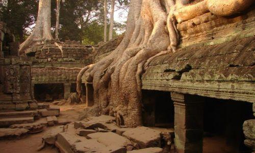 Zdjęcie KAMBODżA / brak / Angkor - świątynia Ta Prohm  / w korzennym uścisku