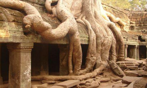 KAMBODżA / brak / Angkor - świątynia Ta Prohm  / w korzennym uścisku