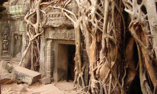 Zdjecie KAMBODżA / brak / Angkor - świątynia Ta Prohm  / w korzennym uścisku