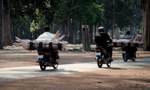 Zdjecie KAMBODżA / - / Angkor Wat / wycieczka