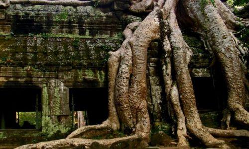 Zdjecie KAMBODżA / Angkor Wat / Ta Prohm / Ta Prohm