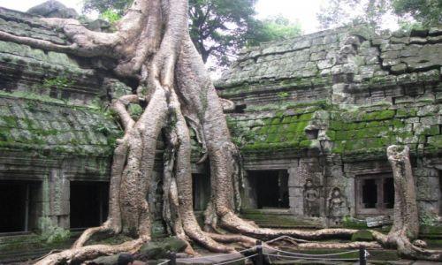 Zdjecie KAMBODżA / Angkor / Angkor / Stare drzewa w starej świątyni