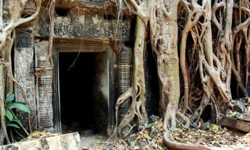 Zdjęcie KAMBODżA / Siem Reap / kompleks Angkor Wat / Ta Prohm