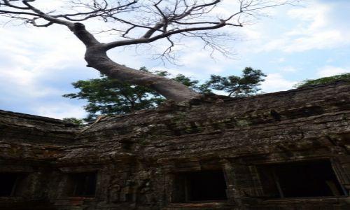 Zdjecie KAMBODżA / Siem Reap / Angkor - Ta Prohm / w krainie Khmerów...