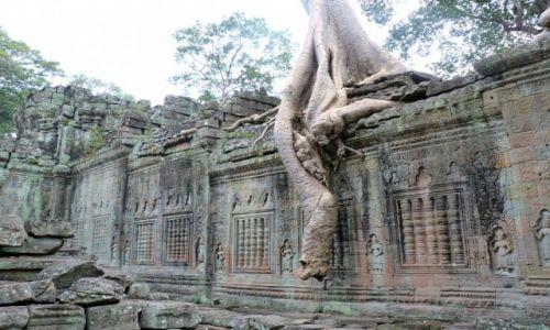 Zdjecie KAMBODżA / Siem Reap / Agkor Wat / Drzewo