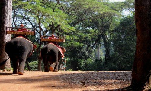 Zdjęcie KAMBODżA / Angkor / Angkor / Słonie