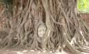 Zdjecie TAJLANDIA / Ayutthaya / Wat Mahathat / Głowa Buddy