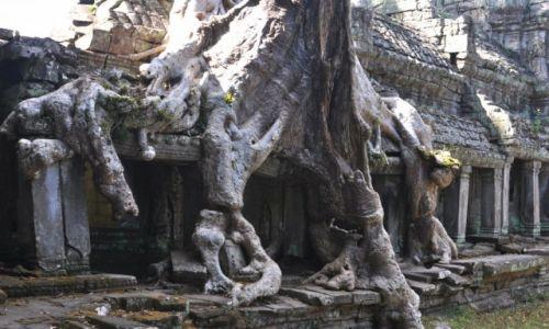 Zdjęcie KAMBODżA / okolice Siem Reap / Angkor / Zarastająca świątynia 2