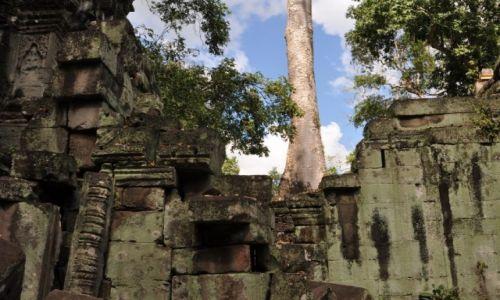 Zdjęcie KAMBODżA / okolice Siem Reap / Angkor / Zarastająca świątynia 3