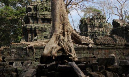 """Zdjecie KAMBODżA / Siem Reap / Angkor / Ta Prohm  - tam powstały zdjęcia do filmu """"Tomb Rider"""""""