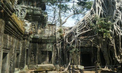 KAMBODżA / Angkor / TA PHROM TEMPLE / TA PHROM TEMPLE