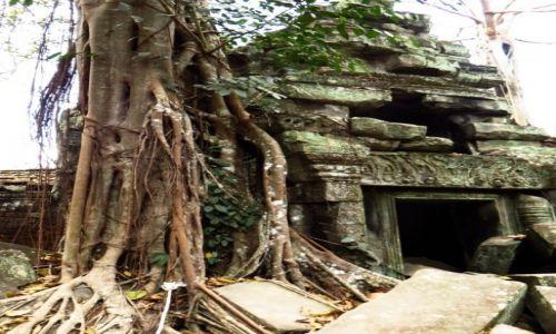 Zdjęcie KAMBODżA / Angkor / okolice Siem Reap / Świątynia Ta Prohm