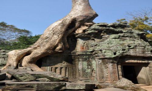 Zdjęcie KAMBODżA / Ankor / Ta Prohm / świątynia