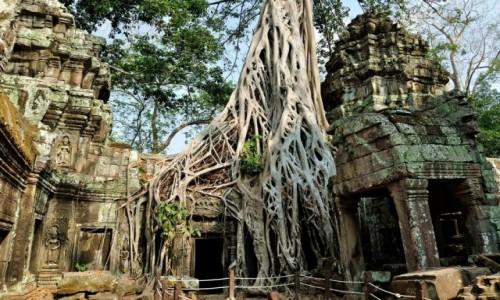 Zdjęcie KAMBODżA / Angkor / Ta Phrom / Siła natury