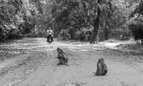 Zdjecie KAMBODżA / Siem Reap / Angkor Wat / Małpy na przystanku