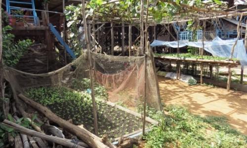 KAMBODżA / Jezioro Tonle Sap / Kampong Phluk / Miniogródek