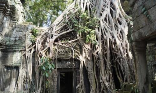 Zdjecie KAMBOD�A / Angkor Wat / Angkor Wat / Ukryte w d�ungl
