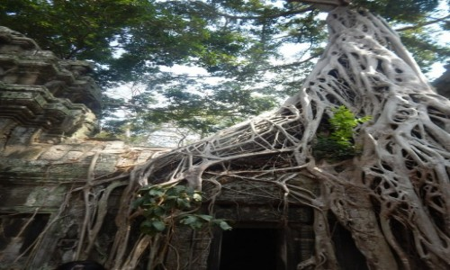 Zdjecie KAMBOD�A / Sieam Reap / Angkor / Ruiny Angkor