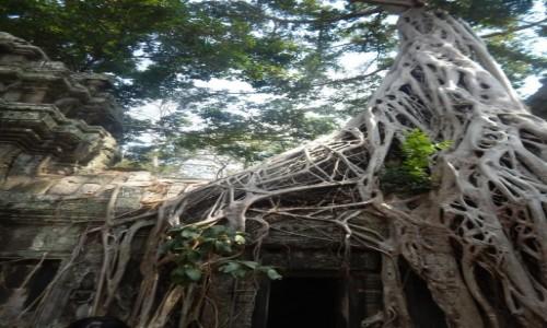 Zdjecie KAMBODżA / Sieam Reap / Angkor / Ruiny Angkor