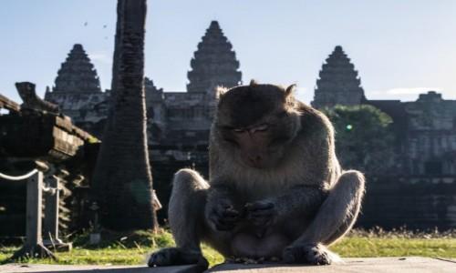 Zdjęcie KAMBODżA / Siem Reap / Angkor wat / Ja tu pilnuję