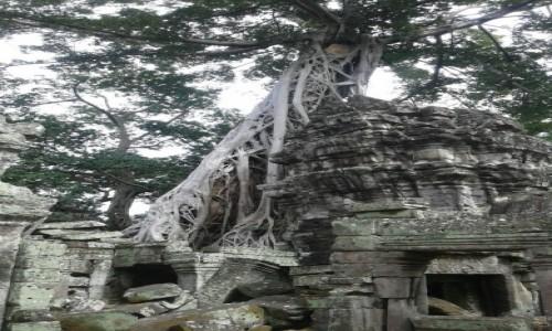 Zdjecie KAMBODżA / - / Siem Reap / Ta Prohm  świątynia w kompleksie Angkor