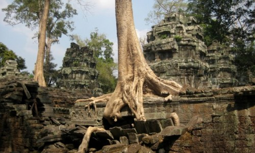Zdjecie KAMBODżA / Angkor / Angkor / Potęga natury