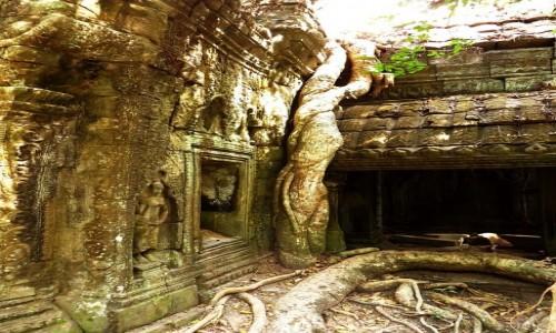 Zdjęcie KAMBODżA / Angkor / okolice Siem Reap / Świątynia Ta Prohm - walka z przyrodą