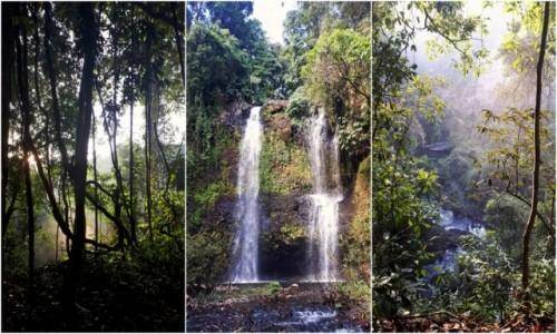 KAMBODżA / Góry Kardamonowe / Góry Kardamonowe / Kambodżańska Dżungla