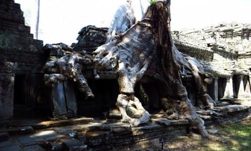 Zdjecie KAMBODżA / Angkor / okolice Siem Reap / Świątynia Prah Khan - walka z przyrodą