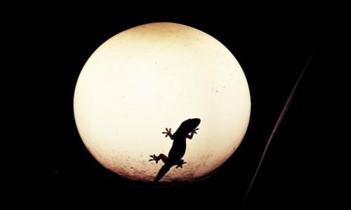 Zdjecie KAMBODżA / Kampot / Kampot / Jaszczurka na księżycu?