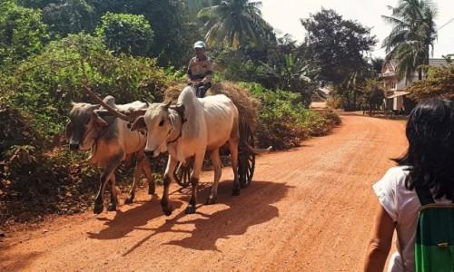 Zdjecie KAMBODżA / okolice Kampotu / okolice Kampong Trach / Z życia na wsi w Kambodży