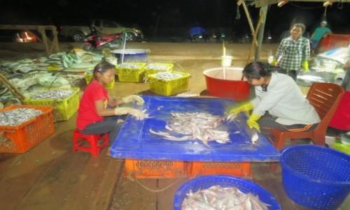 Zdjęcie KAMBODżA / Azja / Kambodża / Kambo segregacja ryb