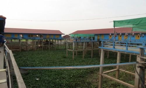 Zdjecie KAMBODżA / Azja / Siem Rep / Kambo szkoła na palach