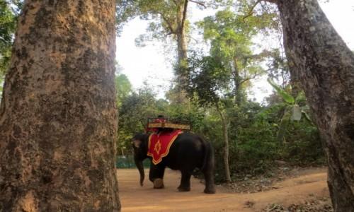 Zdjecie KAMBODżA / prowincja Siem Reap / Angkor / już nie bedę wozić żadnej dupy, hura!