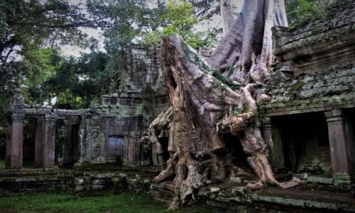 KAMBODżA / Angkor / Świątynia Praeh Khan / Człowiek kontra natura