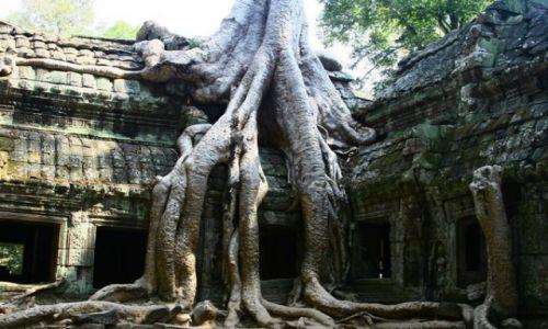 Zdjecie KAMBODżA / brak / Angkor / Ta prohm