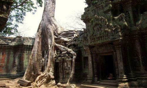 Zdjęcie KAMBODżA / Siem Reap / Swiatynie Angkor / Dzungla nie zna litosci