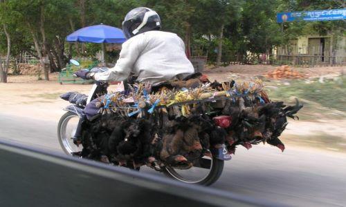 KAMBODżA / Siem Reap / w drodze do Angkor Wat / przejażdżka