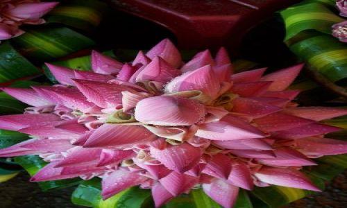 Zdjecie KAMBODżA / Phnom Pen / lokalny bazar / bukiet z kwiatów lotosu
