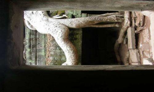 Zdjecie KAMBODżA / brak / Angkor Wat / Drzewo-akrobata