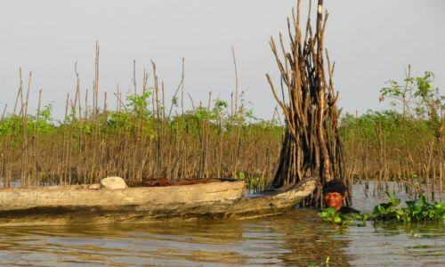 Zdjecie KAMBODżA / brak / OKOLICE SIEM REAP / FLODED FOREST