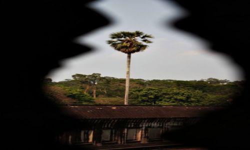 Zdjecie KAMBODżA / - / Siem Reap / palma w Angkor Wat