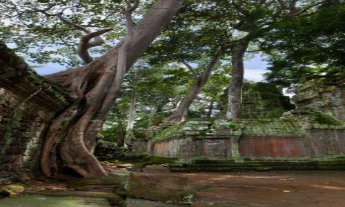 Zdjecie KAMBOD�A / Siem Reap Province / Angkor / Ta Prohm