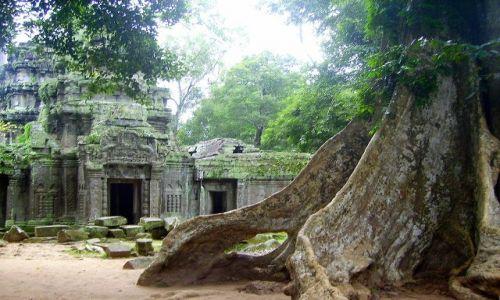 Zdjęcie KAMBODżA / okolice Siem Reap / zespół Angkor Wat / natura kontra dzieło człowieka