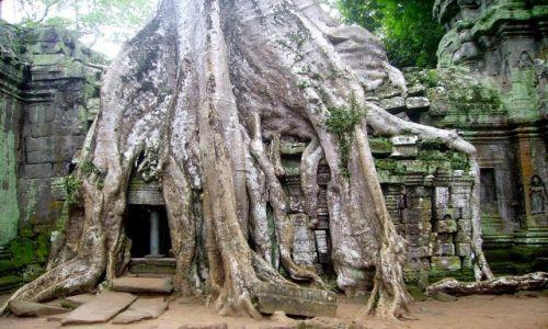 Zdjecie KAMBODżA / okolice Siem Reap / świątynia  Ta Prohm / nierówna walka
