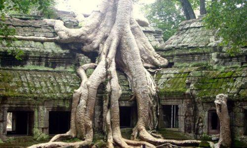 Zdjęcie KAMBODżA / okolice Siem Reap / światynia Ta Prohm /  w twardym uścisku dżungli