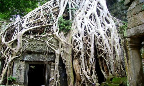 KAMBODżA / okolice Siem Reap / zespół Angkor Wat / w pajęczynie korzeni