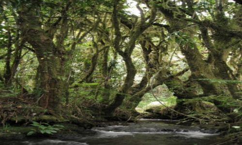 Zdjęcie KAMERUN / Northwestern Prowince / Bamenda Highlands / Strumyk